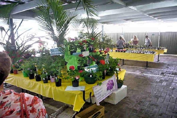 Plant Stall